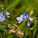Flowers by Lee Jones