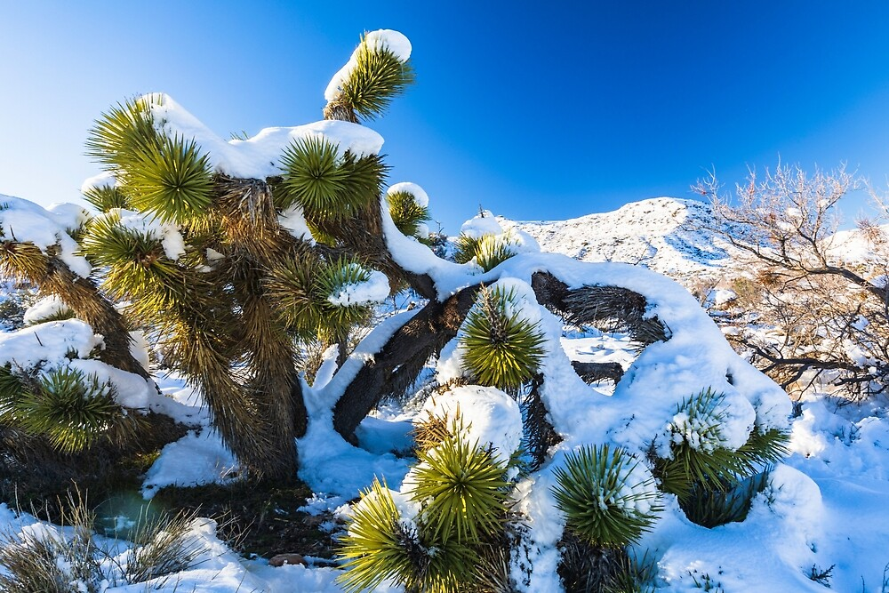 Joshua Tree National Park Snow Day by photosbyflood
