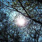 Daylight by Lee Jones