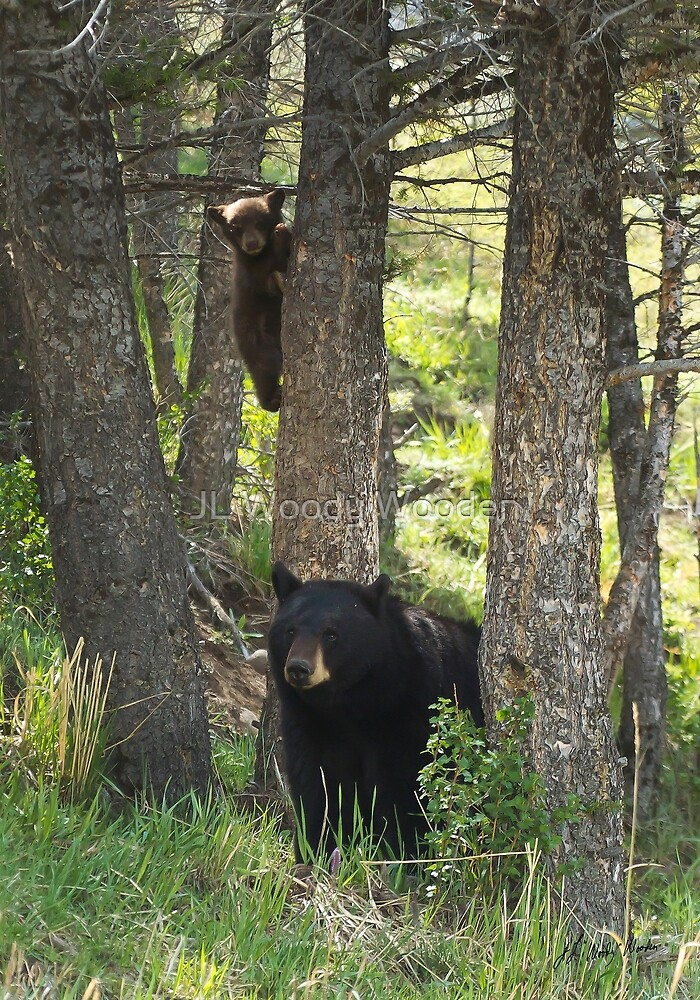 Black Bear Sow And Cub   #0362 by JL Woody Wooden