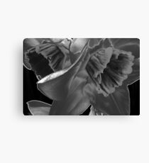 Nature Without Color. Canvas Print