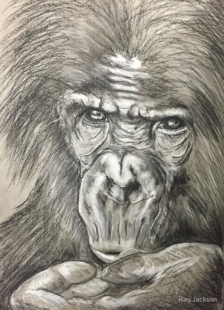 Gorilla by Ray Jackson