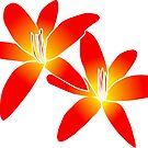 wundervolle orange Lilien, Blumen von rhnaturestyles