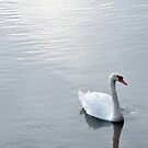 The Swan by funkybunch