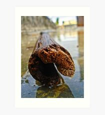 The Bamboo Reflections Art Print