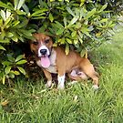 sir dogwood by ponypal