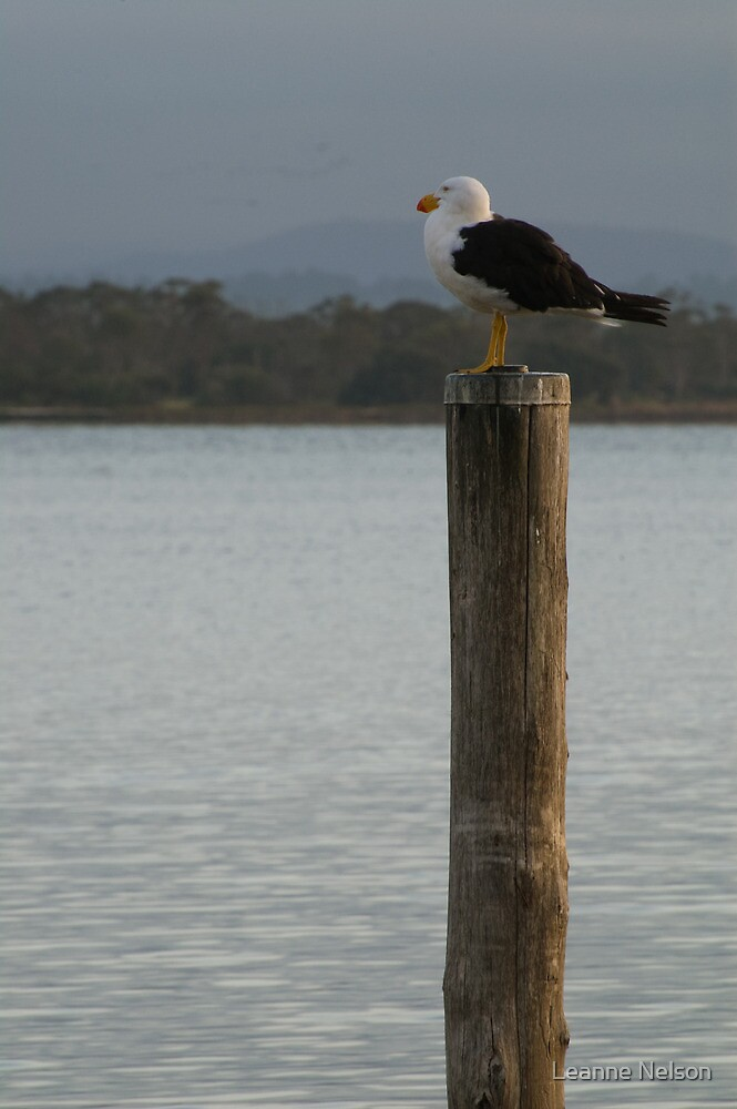 Pacific Gull, East Gippsland by Leanne Nelson