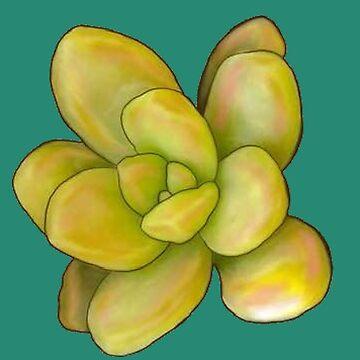Zitronenpfirsich sukkulent von redqueenself