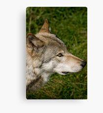 Timberwolves - Parc Omega, Montebello, PQ Canvas Print