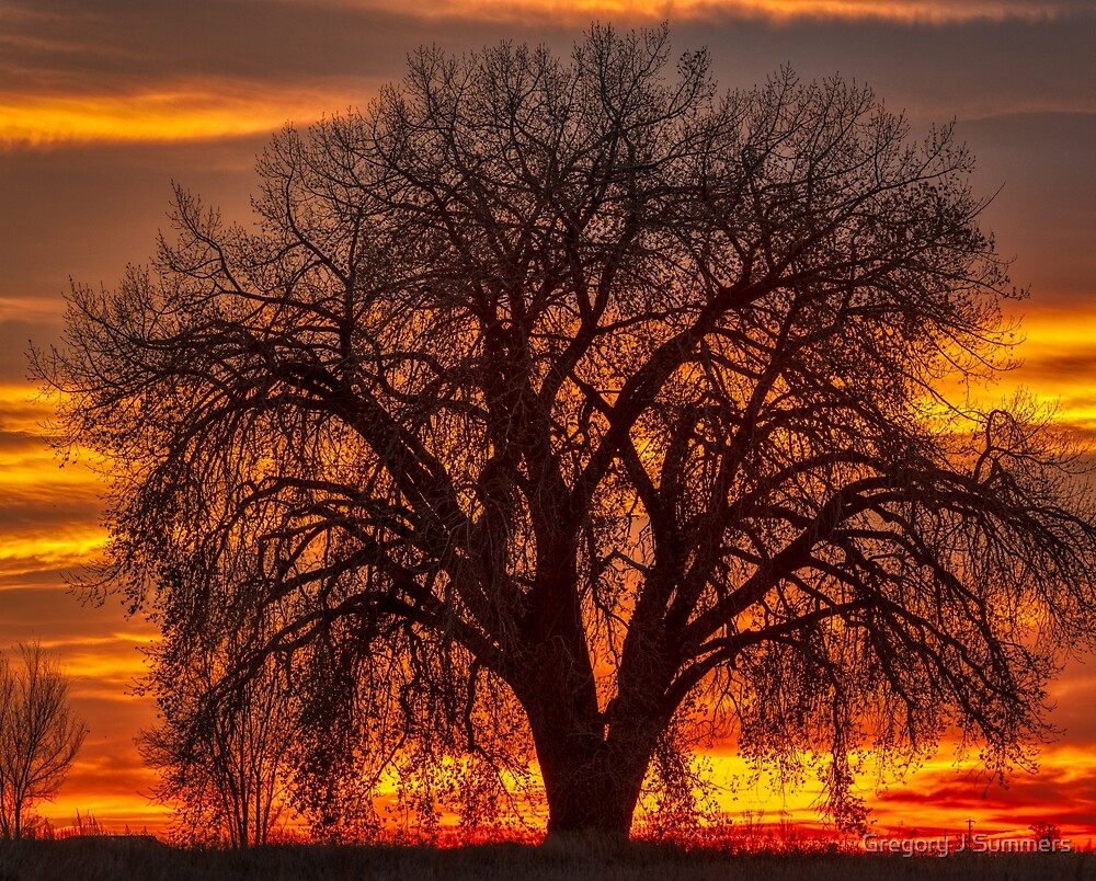 Cottonwood Sunrise by Gregory J Summers