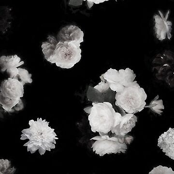 Black and White  Garden Roses by ilzesgimene
