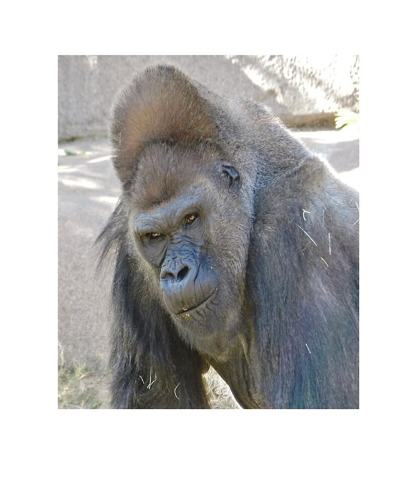 Gorilla by Fjfichman