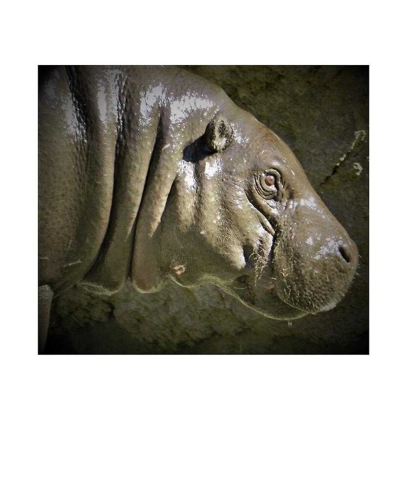 Pygmy Hippopotamus by Fjfichman