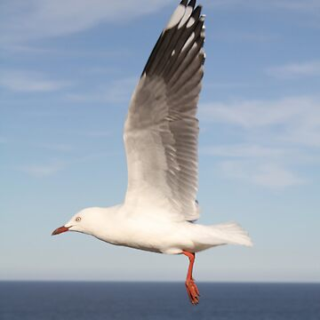 Flying Seagull by stocks14