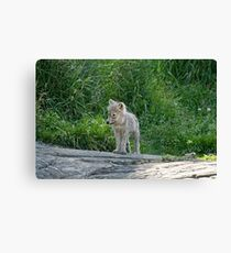 Hey!!! Where did everyone go? Canvas Print