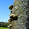 Fungi and/or lichen with blue sky.