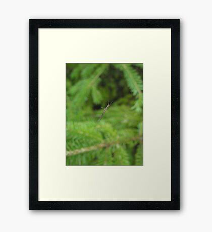 Small Wonders Framed Print