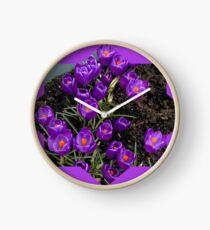 Lila Krokusstern Uhr