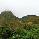 Iao Valley State Park Study 2  by Robert Meyers-Lussier