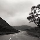 The Road Home by Phill Jenkins