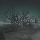 The Tree by the Trench by Rachel  Weaver
