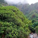 Iao Valley State Park Study 3  by Robert Meyers-Lussier
