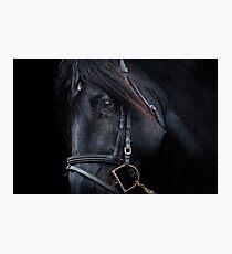 Black Stallion Horse Photographic Print