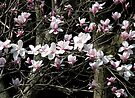 Flight of the Magnolia Blossoms by MarjorieB