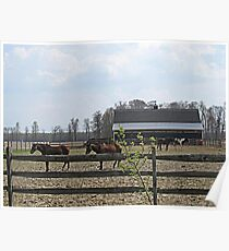 Horsing Around on the Farm Poster