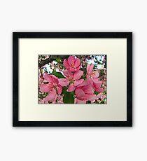 Pink Inspiration Framed Print