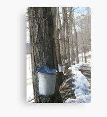 Sugaring Day Metal Print