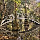 Cypress Swamp - Magnolia Plantation and Gardens by JHRphotoART