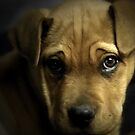 Puppy Eyes by Annie Lemay  Photography