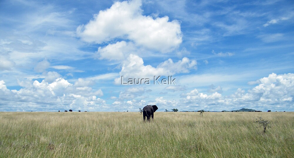 Calling the Herd by Laura Kelk