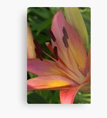 Asiatic lily - my garden Metal Print