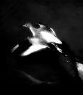 Taking off - Dark by Kerensa Davies