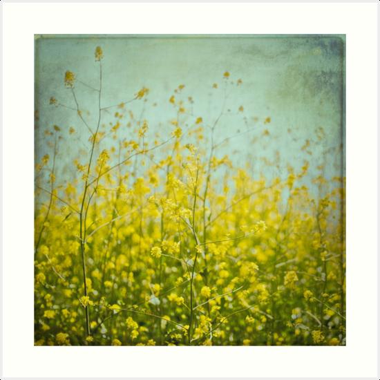 Mustard anyone? by Suzanne Cummings