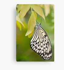 Paper Kite Butterfly Metal Print