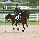 Dressage (view larger) by Tracey  Dryka
