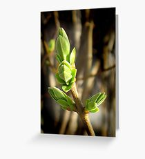 Beautiful Green of Spring Greeting Card