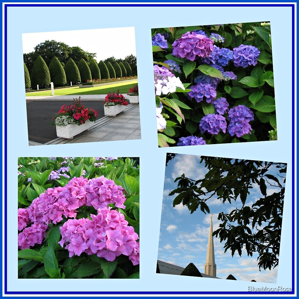 High Summer at the Preston Temple Collage by BlueMoonRose