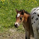 Too Shy! by Tracey  Dryka