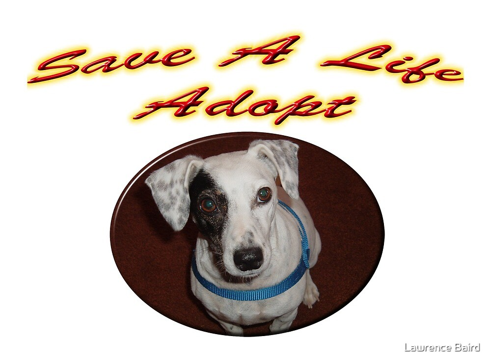 Save A Life Adopt by Lawrence Baird