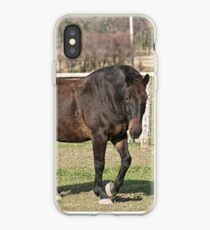 Ringo - Silver Creek Ranch, Ottawa, Ont iPhone Case
