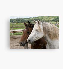 Abigail & Daisy - Silver Creek Ranch, Ottawa, Ont Canvas Print