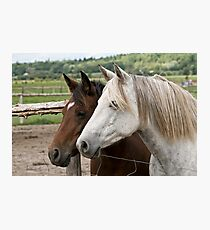 Abigail & Daisy - Silver Creek Ranch, Ottawa, Ont Photographic Print