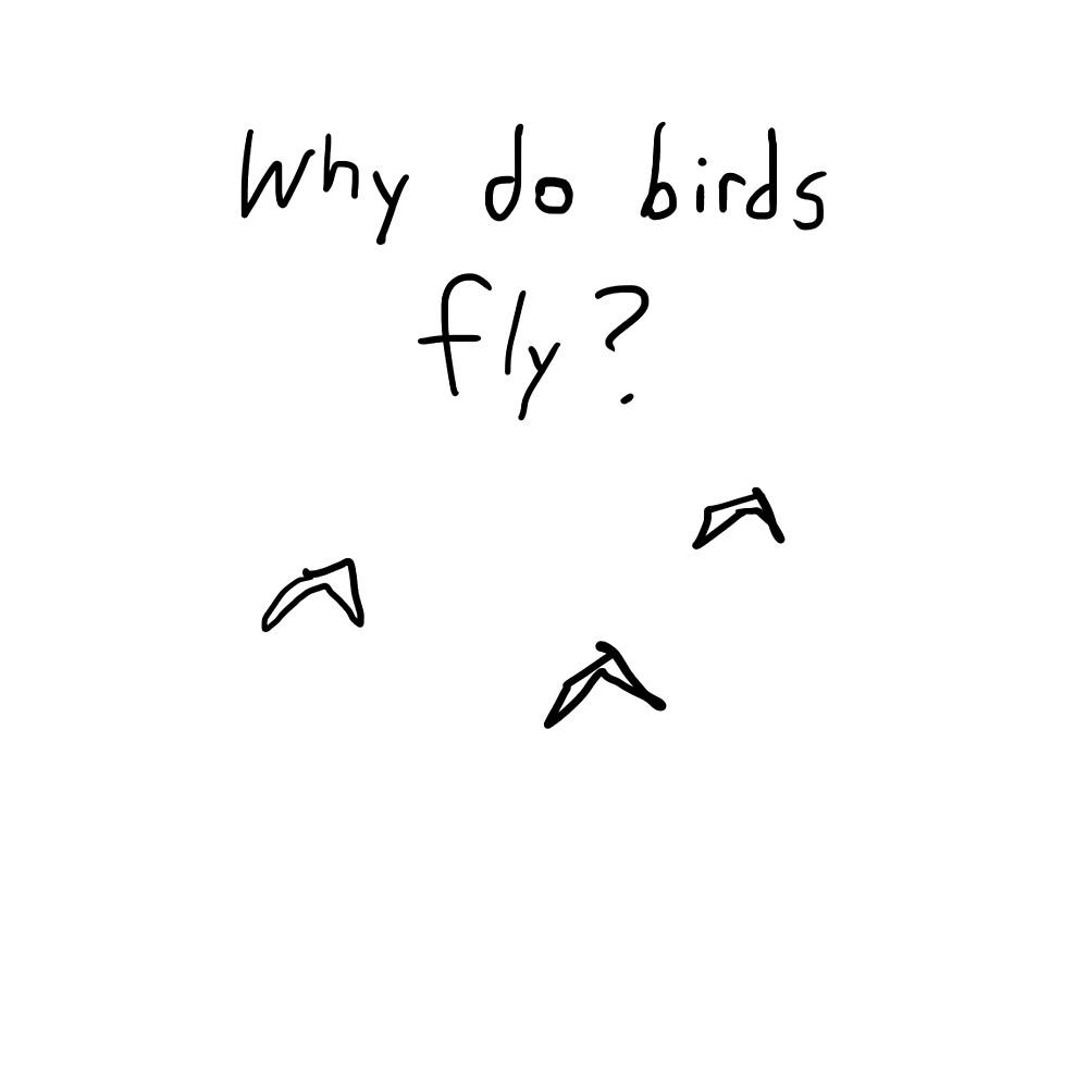 why do birds fly? by animalfactcomic