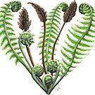 « Coeur de fougères » par Catherine Plante