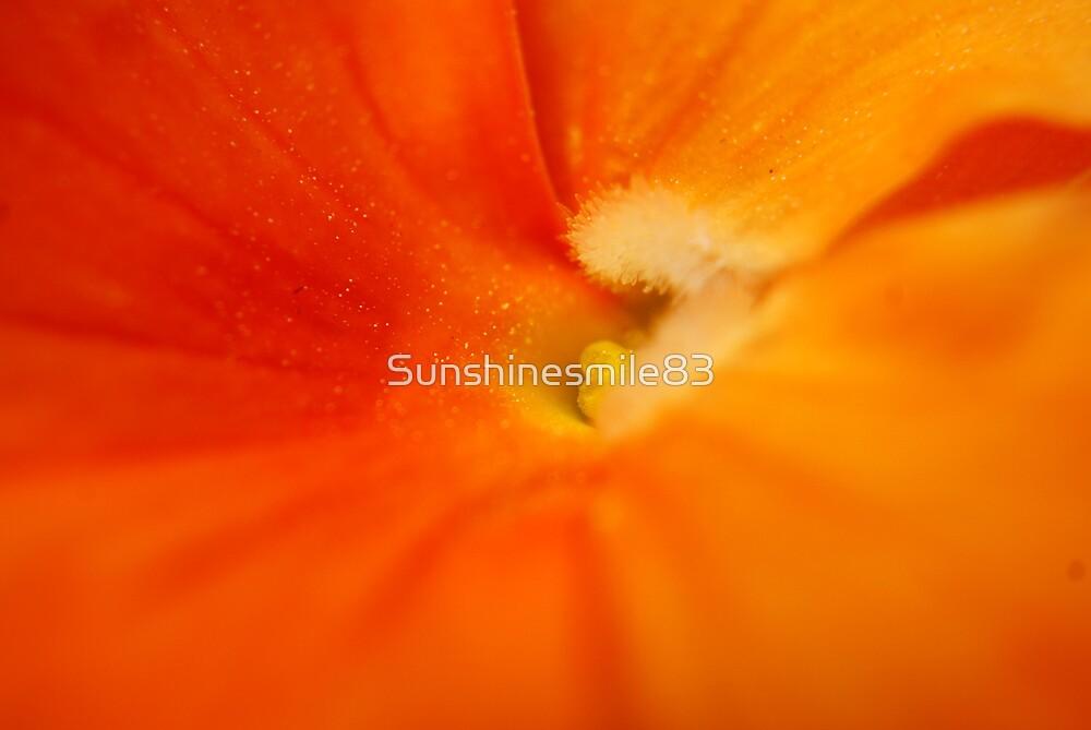 Orange Creamsicle by Sunshinesmile83