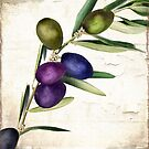 Olive Branch III by mindydidit